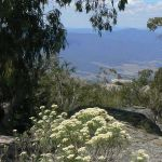 photo-22-Take-a-drive-to-magnificent-Mt-Buffalo